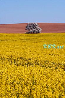 Fotografie - Strom z rozprávkovej krajiny - 4912953_