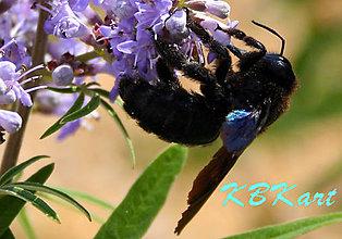 Fotografie - Čierna ovca rodiny včiel... - 4923931_
