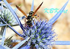 Fotografie - Chorvátska osa - 4926492_