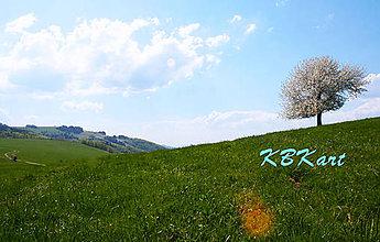 Fotografie - Po chodníčku - 4933602_