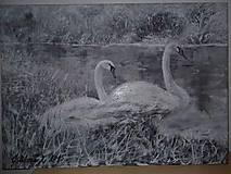 Obrazy - labute pri jazere - 4933477_