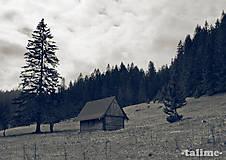 Fotografie - Na samotě u lesa - 4977654_