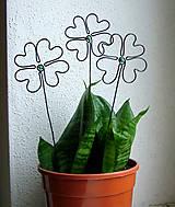 mini štvorlístok do kvetináčika