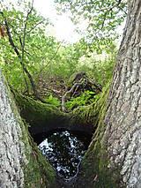 Fotografie - Na potulkách lesom..... - 4987232_