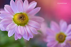 Fotografie - ...farebná... - 5024569_