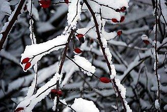 Fotografie - Šípky v bielom šate - 5024107_