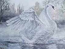Obrazy - labuť - 5063249_