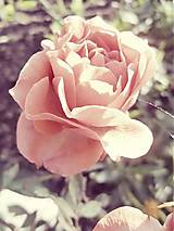 Fotografie - Rosie - 5155524_