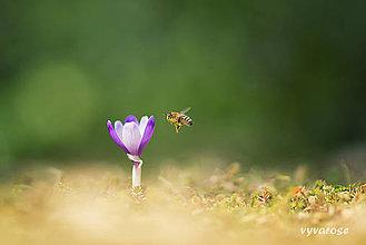 Fotografie - ...bzzz... - 5237047_