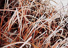 Fotografie - Zamrznutá tráva - 5240971_