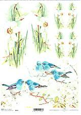 Papier - Ryžový papier Narcisy a vtáčiky 653 - 5243673_