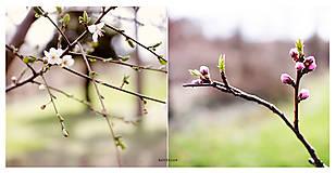 Fotografie - V rozpuku - 5290592_