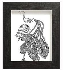 Kresby - pávia sloboda - 5298687_