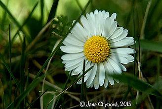 Fotografie - Jar, prebúdzanie I. - 5305935_