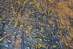 Obrazy - synapsie V. alebo Drážďany `45 - 5308242_