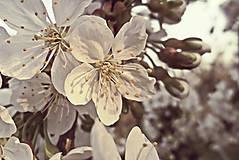 Fotografie - Volanie jari  - 5308835_