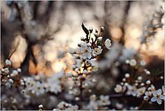 Fotografie - Omamná vôňa sa šíri chladným vzduchom - 5330647_