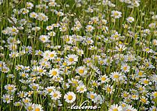 Fotografie - Vôňa lúčnych kvetov... - 5356718_