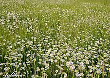 Fotografie - Vôňa lúčnych kvetov... II - 5356759_