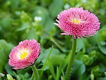 Fotografie - Ružové krásky - 5401505_