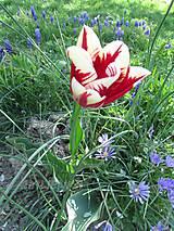 Fotografie - Kúzelník - 5420542_