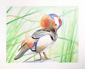 Obrazy - Kachnička mandarínská - originál, akvarel - 5444374_