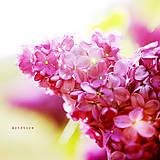 Fotografie - Zaliate medovými lúčmi - 5446970_
