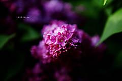 Fotografie - Svetlo v tme - 5446974_