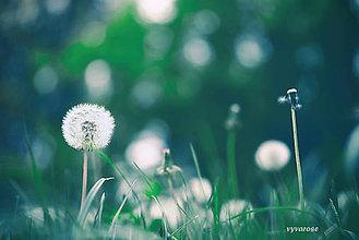 Fotografie - ...púpava... - 5525025_