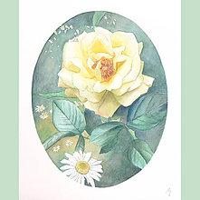 Obrazy - Růže mezi kopretinami - originál, akvarel - 5637288_