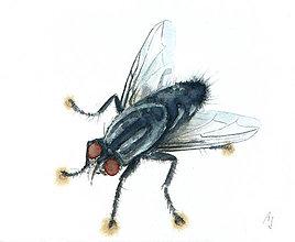 Obrazy - Moucha 2 - originál, akvarel - 5659745_