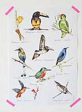 - Poster Vtáci Strednej Ameriky - 5686214_