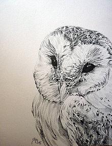 Kresby - White owl - 5688836_