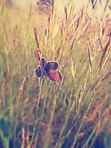 Fotografie - Motýľ na lúke  - 5707108_