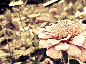 Fotografie - Lúčne kvety - 5760124_