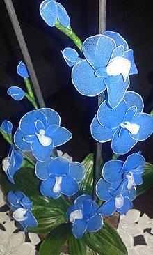Dekorácie - Modrá orchidea - 5776851_