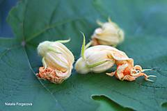 Fotografie - Pumpkin flower - 5782425_