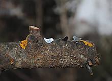 Náušnice - vtáčatká - 5785954_