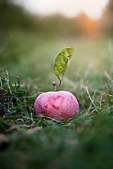 Fotografie - kusok lasky v tráve... - 5871420_
