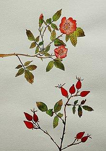 Kresby - akvarelová maľba bylinky... - 5896206_