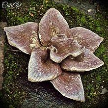 Galantéria - Čokoládová orchidea (sada 3 ks) - 5933362_