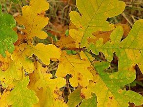 Fotografie - Jesenná paleta - 5932407_