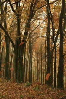 Fotografie - Jesenná nálada...-2foto - 5991722_
