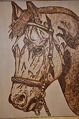 Obrazy - kôň - 6099604_
