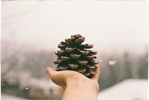 Forest jewels_A4 analógová fotografia