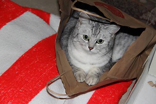 pekná mačička Foto