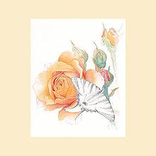Obrazy - Růže Crown Princess Margareta - originál, akvarel a kresba tužkou - 6309833_