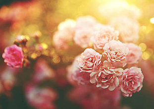 Grafika - Kráľovná záhrady 2 - 6311678_