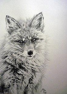 Kresby - Fox - 6327972_