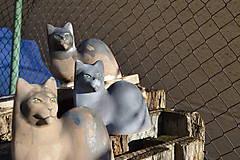 """Socha - Mačka   """"Na priedomí, na jar"""" .... . Set. - 6364560_"""